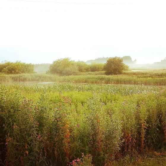 朝焼けの中の草原