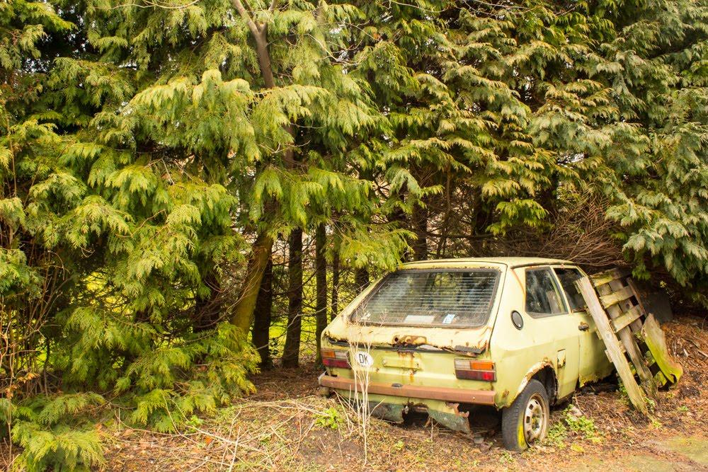 林の中で黄緑色の古い車が捨てられている