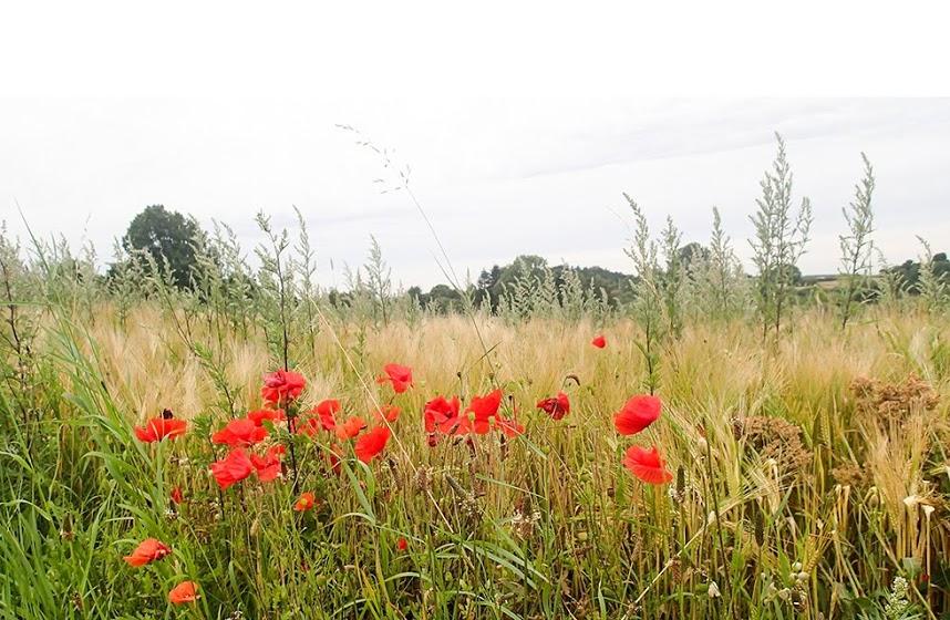 草原とスイートピー