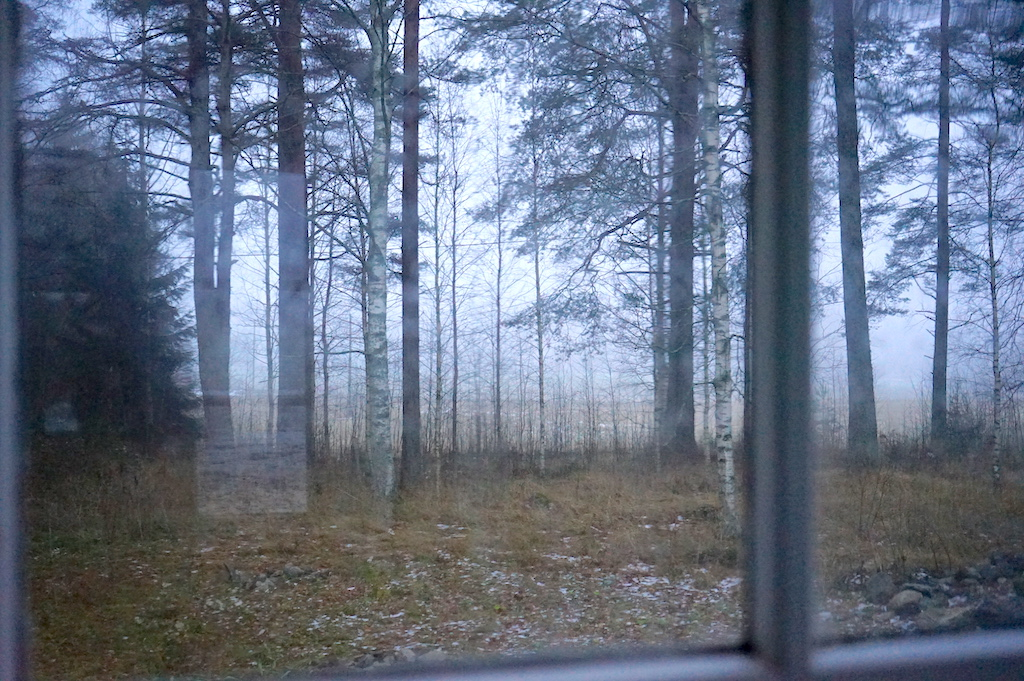 forest through the window