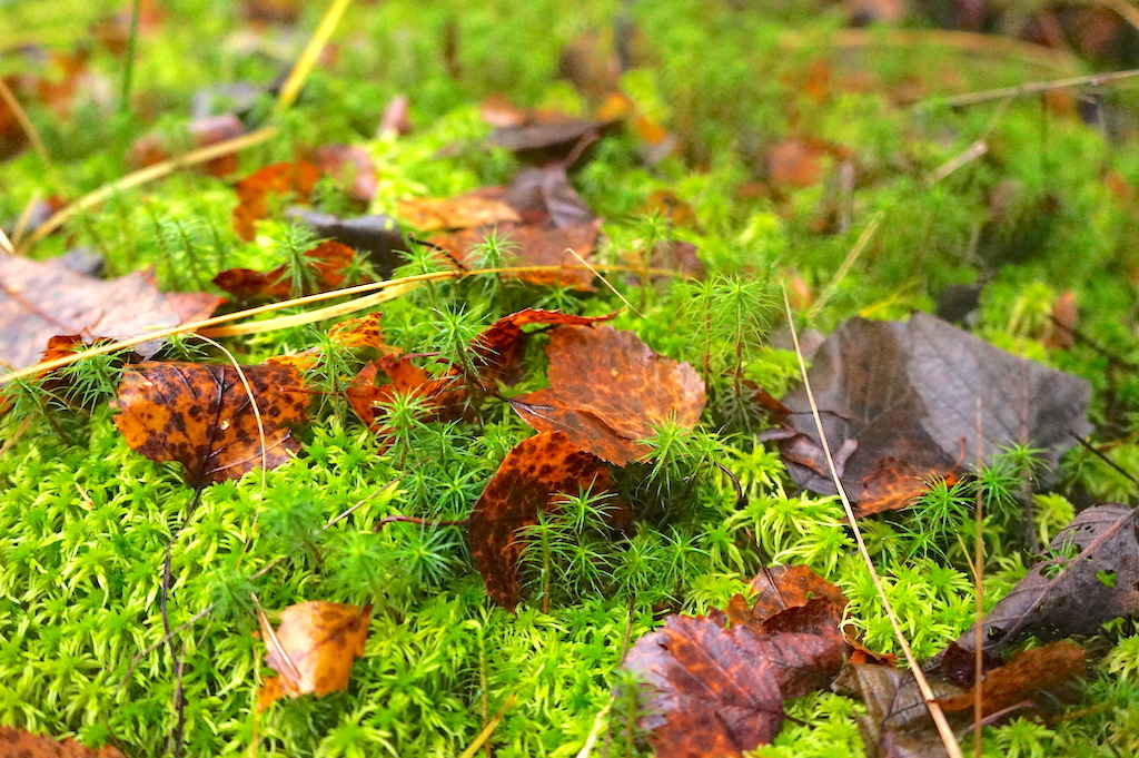 green grass and red leaves