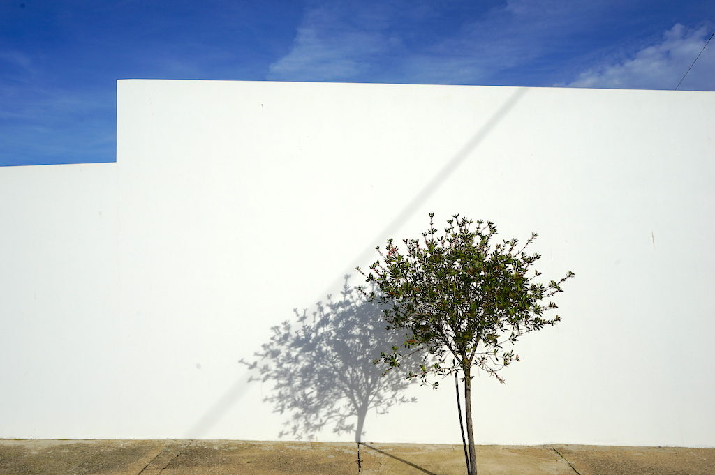 a tree in front of a white wall